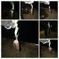 ぎーちゃんさんのジンドウイカの釣果写真