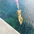 ペチャンコさんの大分県津久見市での釣果写真