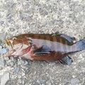 Buzz さんの鹿児島県志布志市での釣果写真