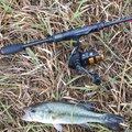 メリーズパンツ改さんの秋田県での釣果写真