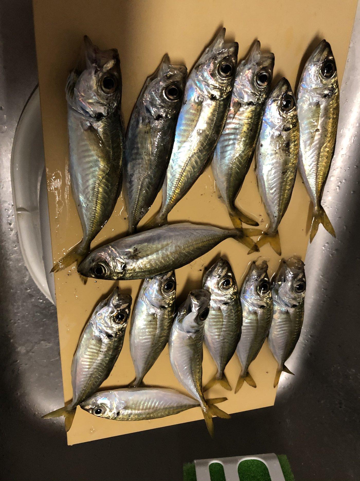 おいなりさんの投稿画像,写っている魚はアジ