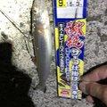 Natsuko  さんの香川県東かがわ市での釣果写真