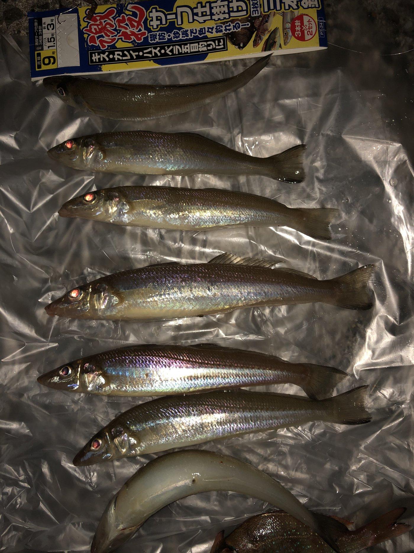Natsuko  さんの投稿画像,写っている魚は