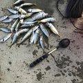 まーさんの岩手県上閉伊郡での釣果写真