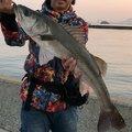 hikaruさんの福岡県でのスズキの釣果写真