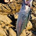 ドンコビッさんの鹿児島県肝属郡での釣果写真