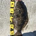 じゅうべえさんの宮城県でのヒラメの釣果写真