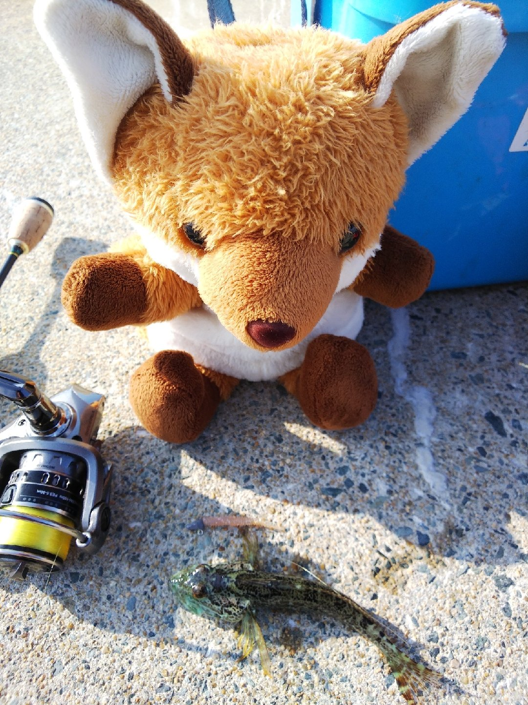 釣り吉お稲荷ちゃんさんの投稿画像,写っている魚はアナハゼ