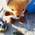 釣り吉お稲荷ちゃんさんのアナハゼの釣果写真