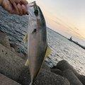 ∞マカナ∞さんの茨城県での釣果写真