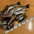 フィッシャーさんの神奈川県でのカサゴの釣果写真