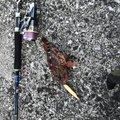 うらともさんの鹿児島県出水郡での釣果写真