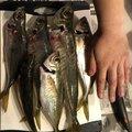 ma-kunbooさんの長崎県長崎市での釣果写真