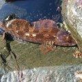 ゴールドさんのアイナメの釣果写真