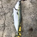 ryoさんの広島県での釣果写真