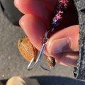 punさんの青森県三沢市での釣果写真