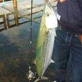 基ちゃんさんの新潟県三島郡での釣果写真