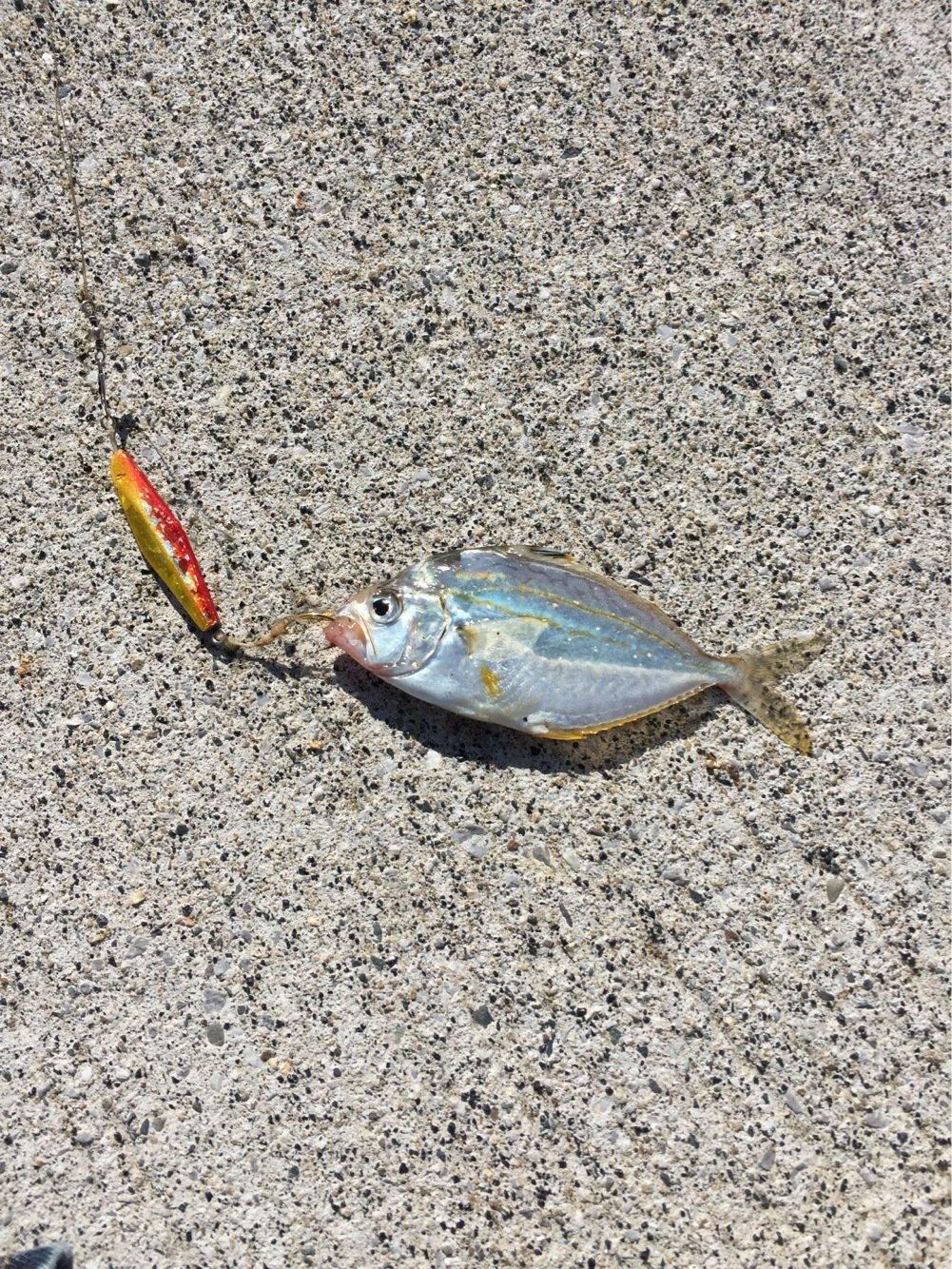 にぃにぃさんの投稿画像,写っている魚は
