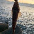Suguruさんの茨城県での釣果写真