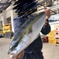 カツキさんの福岡県福津市での釣果写真