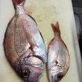 金魚さんの大分県津久見市での釣果写真