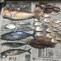 Shotaさんのマサバの釣果写真