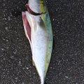 あなろぐさんの三重県での釣果写真