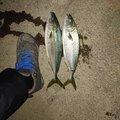 つとすさんの青森県上北郡での釣果写真