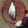 まあサムライさんの長崎県長崎市での釣果写真