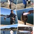 のののぶ3さんの愛知県でのタケノコメバルの釣果写真