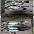 やまちさんの千葉県浦安市でのスズキの釣果写真