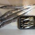 松山カイさんの兵庫県での釣果写真