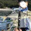 カズピトさんの兵庫県での釣果写真