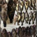 mi2106さんの宮城県での釣果写真