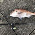 ソウタさんの鹿児島県指宿市での釣果写真