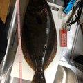 ロック&フラットさんの宮城県での釣果写真