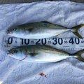 サカやんさんの徳島県徳島市でのエソの釣果写真