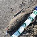 晴れ時々坊主さんの山形県飽海郡での釣果写真