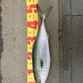 いいつか まさるさんの茨城県での釣果写真