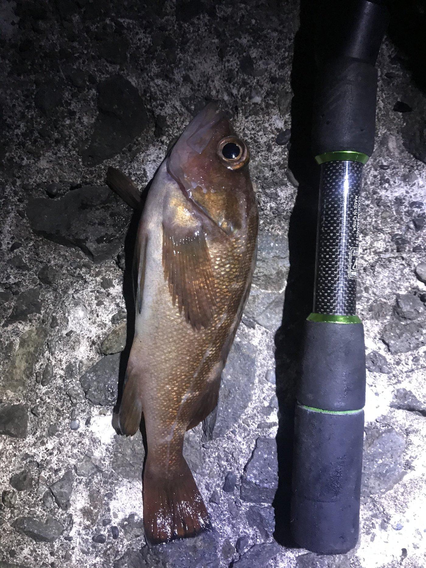 BBAさんの投稿画像,写っている魚はエゾメバル