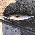 no.。o○さんの愛知県での釣果写真