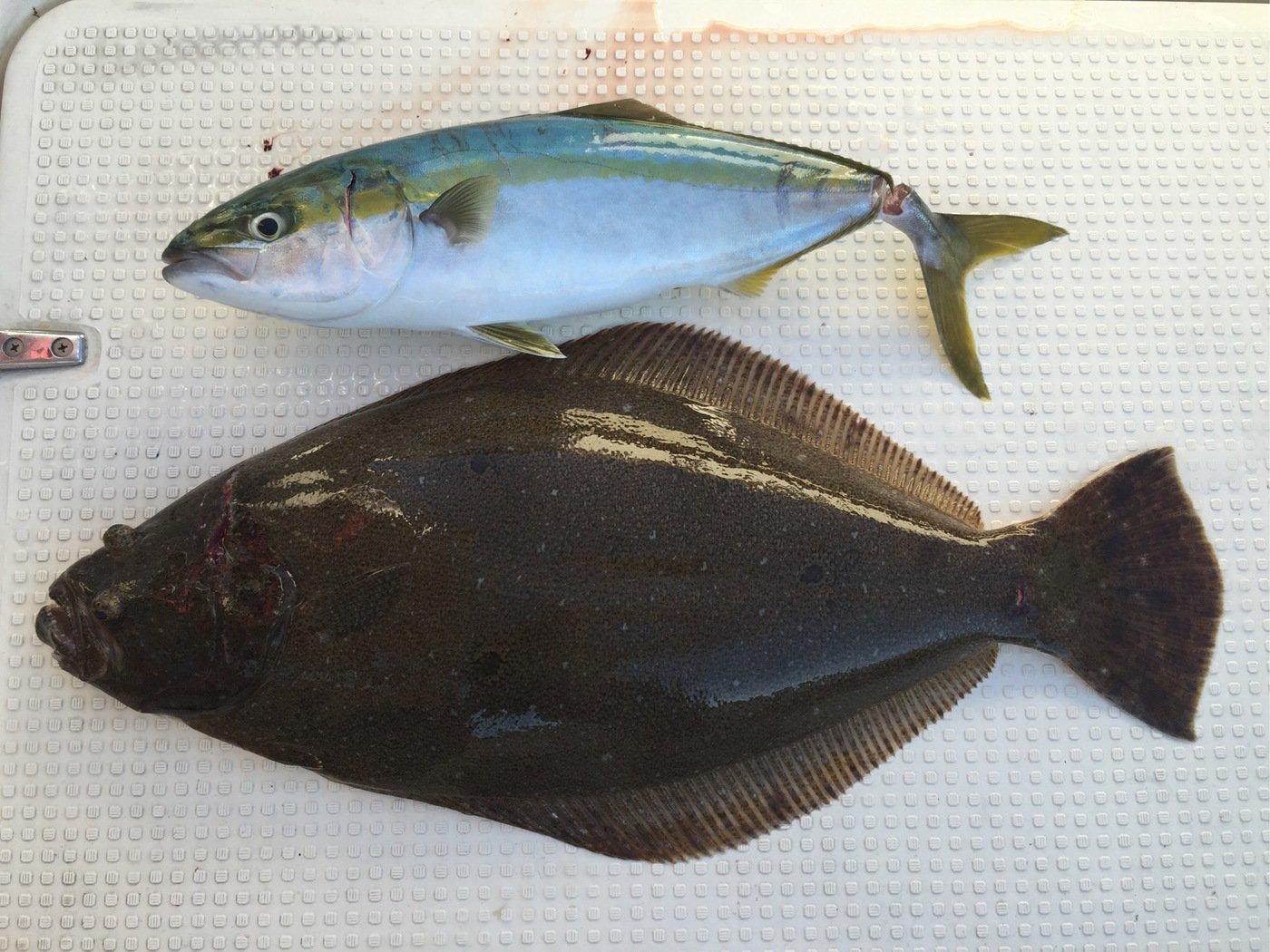 海人さんの投稿画像,写っている魚はヒラメ