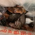 T-Mashさんの愛知県での釣果写真