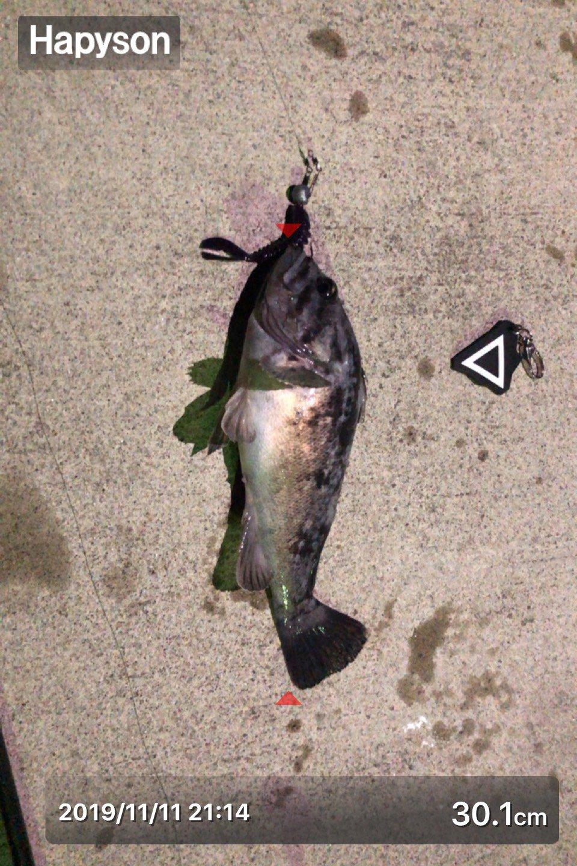 てちこさんの投稿画像,写っている魚はクロソイ