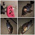百姓漁師さんの茨城県での釣果写真