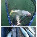 うーさんの香川県香川郡での釣果写真