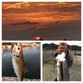 釣り人YKさんの福岡県福岡市での釣果写真