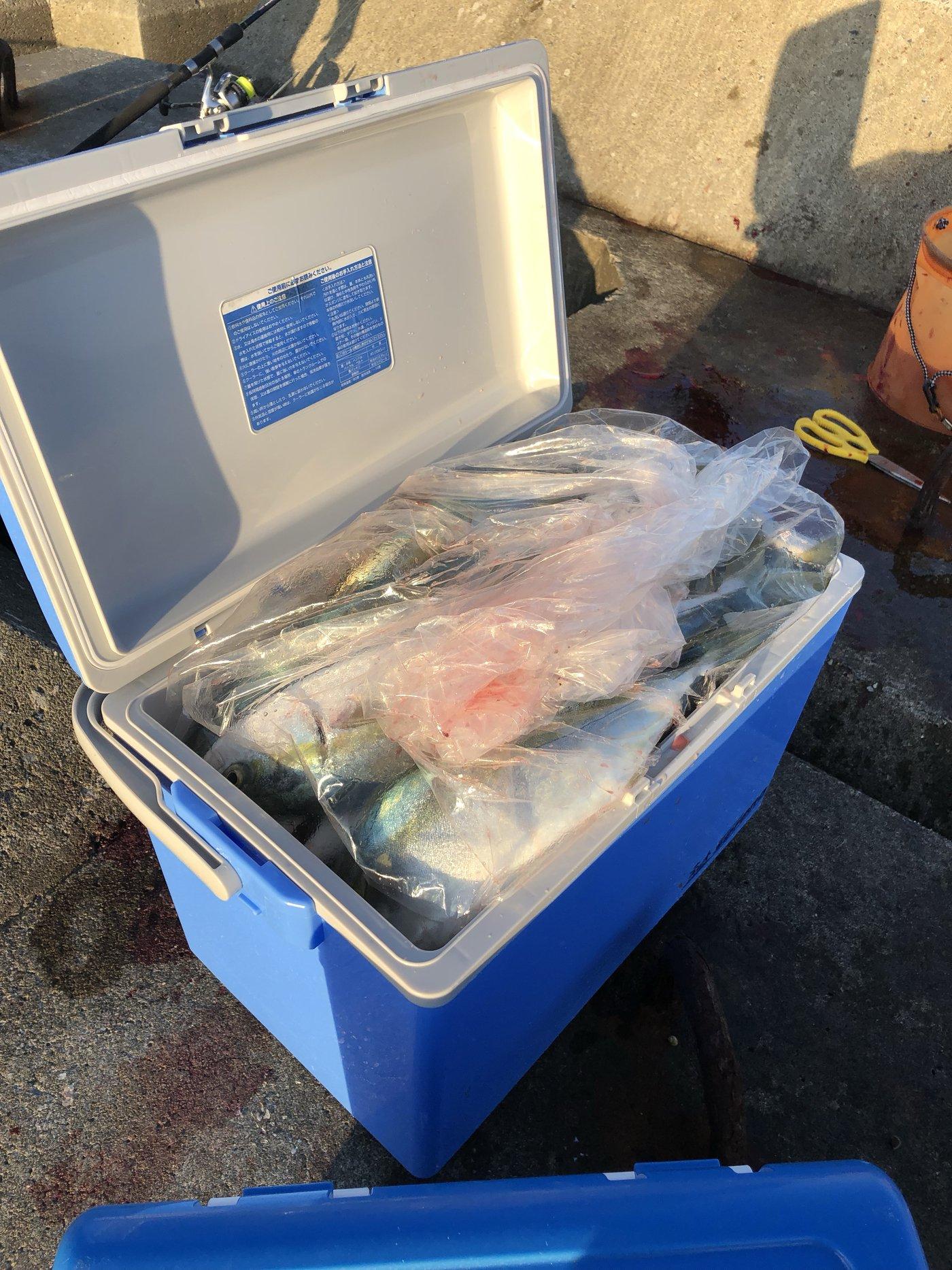 Dadeiさんの投稿画像,写っている魚はブリモドキ
