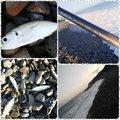 ⚝オやジちゃん⚝さんの新潟県糸魚川市での釣果写真