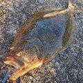 AVESHIさんの熊本県天草市での釣果写真